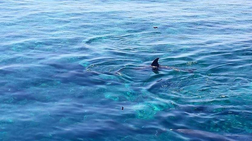 Schnorcheln und schwimmen mit Delfinen ab El Gouna.
