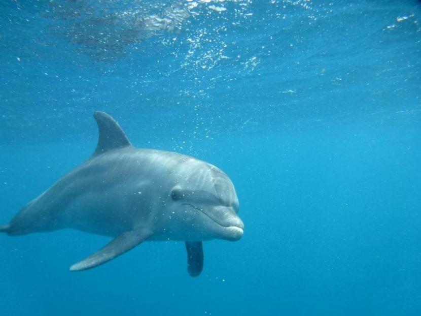 Schwimmen mit Delfinen in Sharm El Sheikh