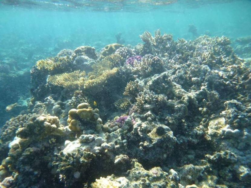 Tiran Island from Sharm el sheikh