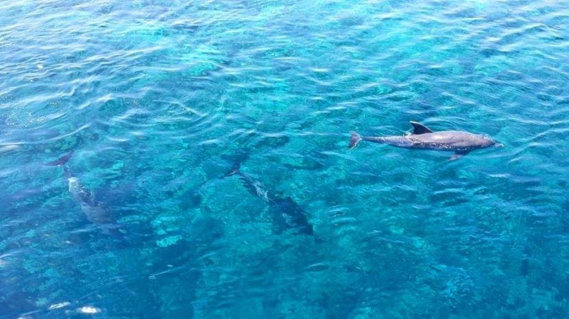 Schnorcheln und schwimmen mit Delfinen ab Makadi Bay