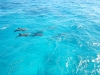 Swimming with Dolphins in Hurghada