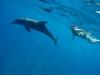 Ausflug nachAbu Dabbab undSchwimmen mit Schildkröten